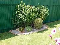 Zahrada - apartmán k pronajmutí Plumlov