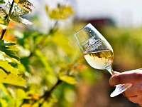Vinný sklep Nechory - chalupa k pronajmutí - 4 Prušánky