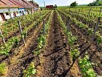 Vinný sklep Nechory - chalupa ubytování Prušánky - 5
