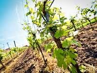 Vinný sklep Nechory - chalupa k pronájmu - 6 Prušánky