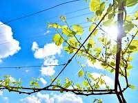 Vinný sklep Nechory - chalupa - 13 Prušánky