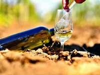 Vinný sklep Nechory - chalupa k pronájmu - 15 Prušánky