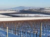 zimní pohled na Pálavu od nás z vinohradu
