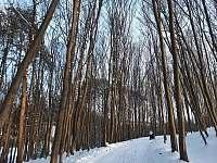 okolí v zimě - Vlachova Lhota
