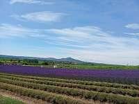 levandulová farma Starovičky s Pálavou - Nové Mlýny