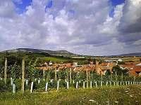 Výhled z horní zahrady na Pálavu