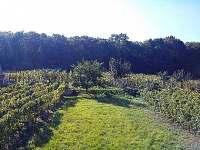 Výhled z jídelny - vinohrad a les