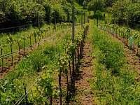 naše vinice -pálava - Uherčice