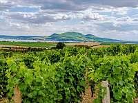 naše vinice v Popicích - Uherčice