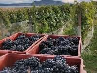 vinobraní - Svatovavřinecké - chalupa k pronájmu Uherčice