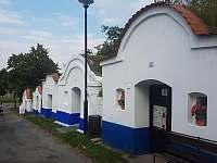 Vinné sklepy Plže v Petrově