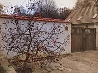 Mišpule před naši domem (penzionem)