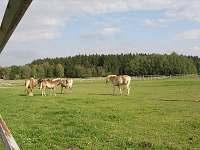 koně v ohradě