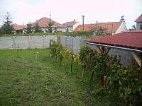 Zahrada s posezením a vinohradem - pronájem chalupy Dolní Dunajovice