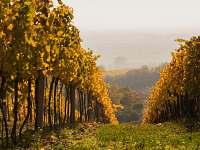 Vinohrady - Vrbice
