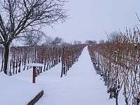 Zima ve vinohradu - Prušánky - Nechory