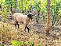 Penzion jako víno - miniZOO a naše zvířátka - Bulhary