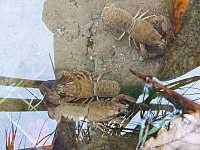 Čistá voda v přehradě - pronájem chaty Lučina