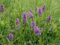 Vylet na orchidejove louky je idealni v obdobi kvetna-cervna
