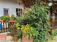 Zeleň na dvoře - Uherské Hradiště