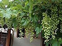 Vinný sklep U Bolfíků - chalupa - 19 Prušánky - Nechory