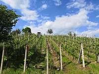 Vinohrad - chata k pronájmu Mutěnice
