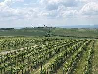 Vinice v okolí - Šakvice