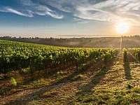 Vinohrady - Olbramovice