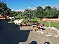 Parkoviště pro auta a koně :-) - Petrovice