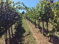 Vinohrad - chata k pronajmutí Mutěnice