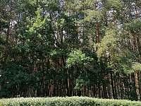 Les před chalupou - pohled z terasy - k pronajmutí Hostíkovice