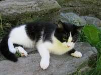 naše kočka Mona - Velká Úpa