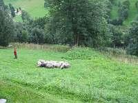 ovečky na louce  pod chalupou