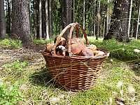 houbařský ráj v okolí chaty - Oblanov - Dolce