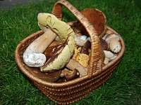 houby v okolí domu