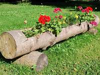 květiny - Svoboda nad Úpou