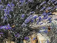 Zahrada - ubytování Paseky nad Jizerou