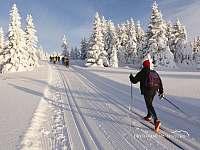 Zima na tratích - pronájem chalupy Benecko