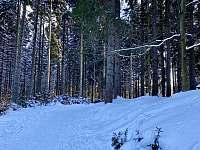 Lesní cesta za domem - Harrachov