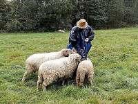 pasení oveček