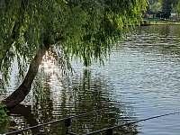 Chata u rybníka - chata - 33 Trutnov - Oblanov