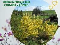 krásy jara - Bernartice