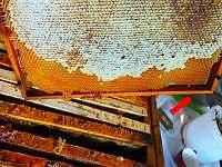 děláme i do včel - Horní Lánov