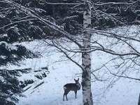 Lesní zvířátka kolem nás - Pec pod Sněžkou