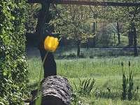 Jaro před chalupou