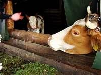 naše farma - Semily - Nouzov