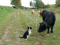 naše farma s Docentem - apartmán k pronájmu Semily - Nouzov