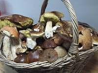 Pro milovníky houbaření