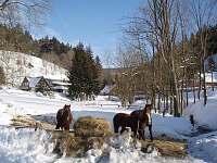 Chalupa Kůlna - chalupa k pronájmu - 3 Dolní Lysečiny
