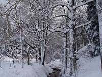 Albeřický potok - chalupa ubytování Dolní Lysečiny
